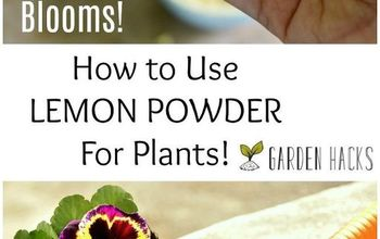 How to Use Lemon Powder for Plants