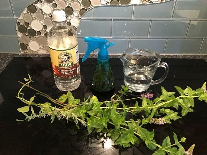 diy bug repellents traps