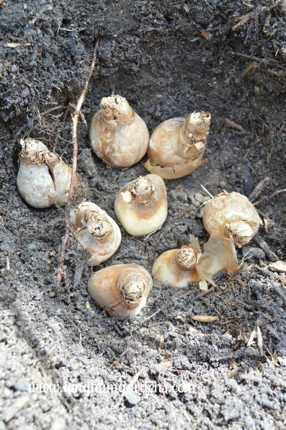 fall gardening how to plant bulbs for amazing spring flowers