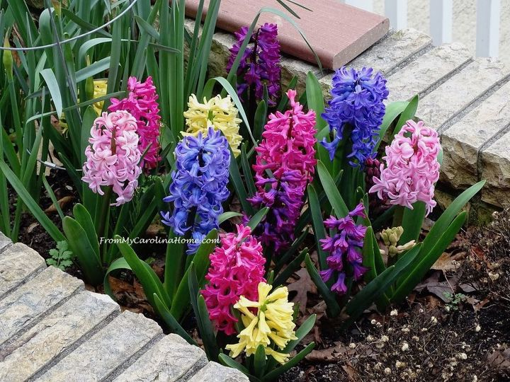 garden transition to fall and preparing for next spring