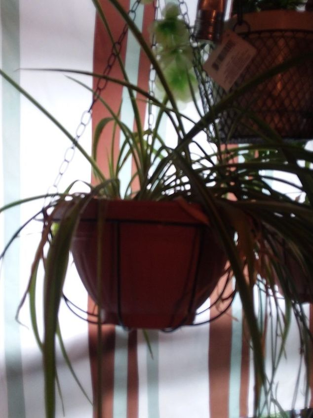 q how do i keep my plants healthy