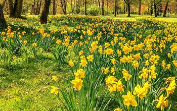 All About Planting Spring Blooming Bulbs in Fall