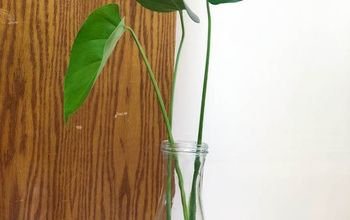 How to Propagate Your Monstera Deliciosa Plant