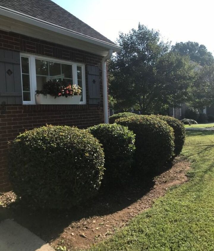 trimming shrubbery up and away from our home s exterior