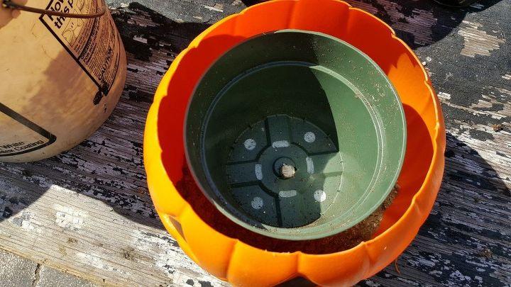 concrete pumpkin flower pot for autumn and halloween