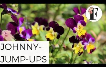 easy to grow flowers johnny jump up flowers from seed