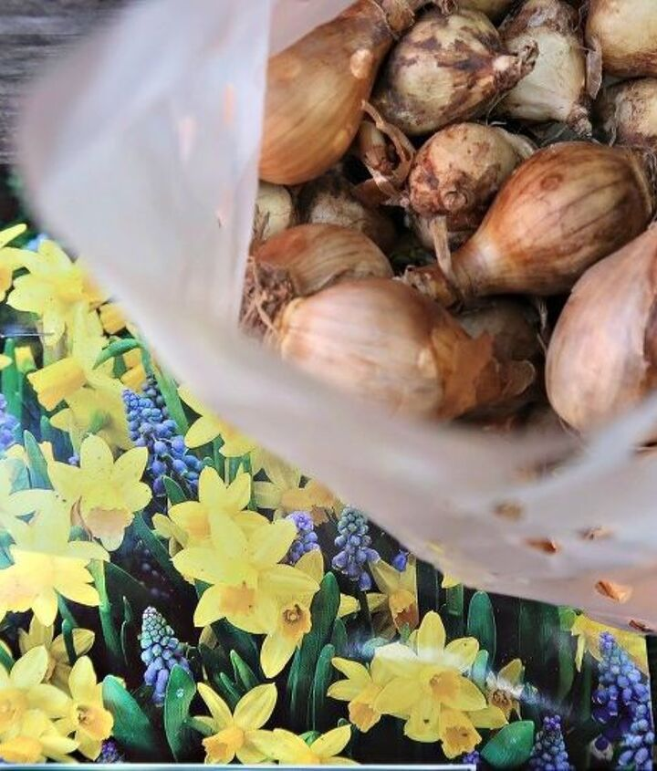 how to plant a beautiful bulb lasagna for spring