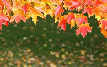 fall tree care tips how to prep your trees for winter s freeze