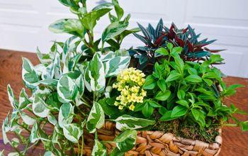 dish gardening 101 designing planting care