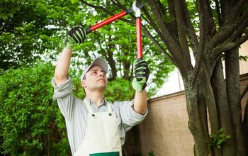 6 steps to remove a tree from your garden
