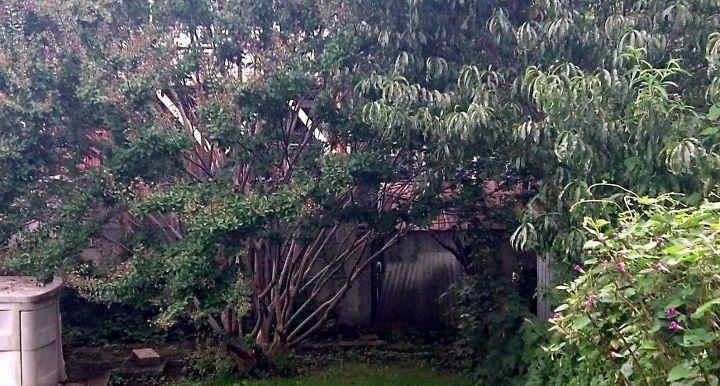q best way to prune this crape myrtle