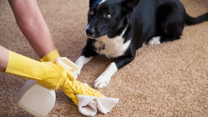 q what is the best way to clean pet hair from wood floors