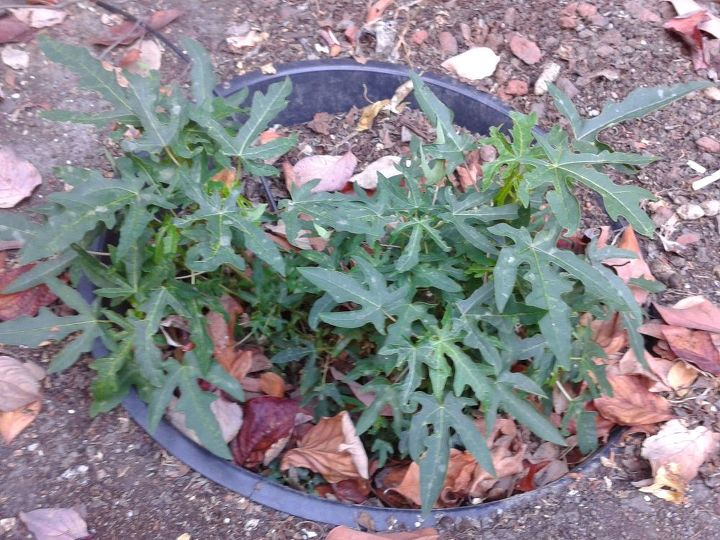 q does anyone know what this plant is