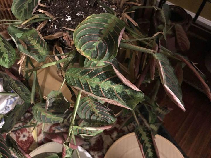 q plants not doing well