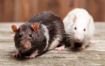 tips to eliminate mice from your house forever