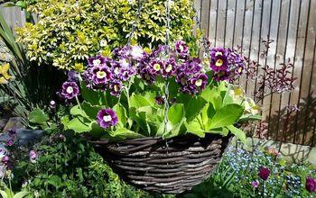 5 tips to maintain a beautiful garden