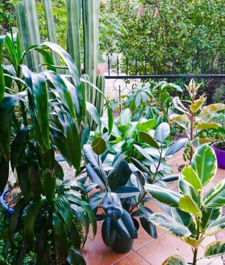 how i feed my houseplants naturally with worm compost compost