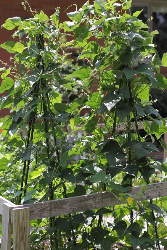 tips for gardening in small spaces