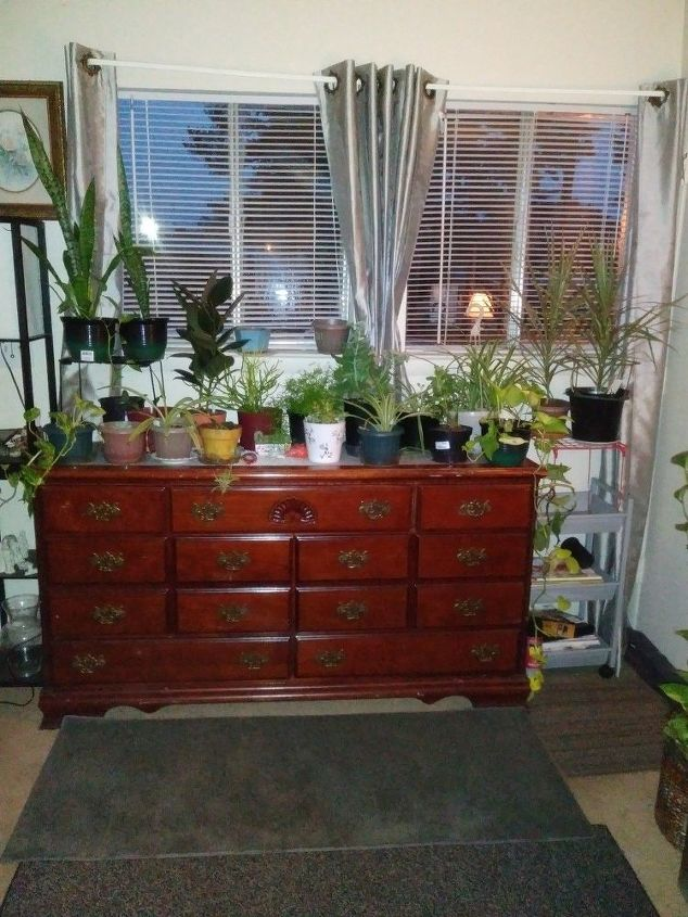 q my house plants need life