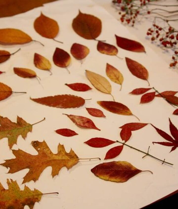 Just a few of this season's Autumn leaves.