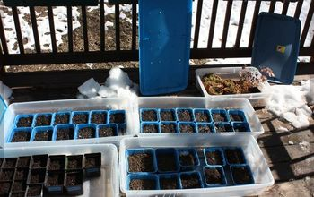 Better Winter Sowing — Seed Trays in Storage Bins Outdoors