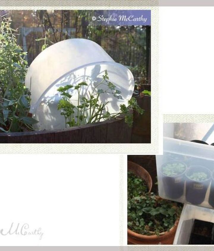 Storage container as mini greenhouse.