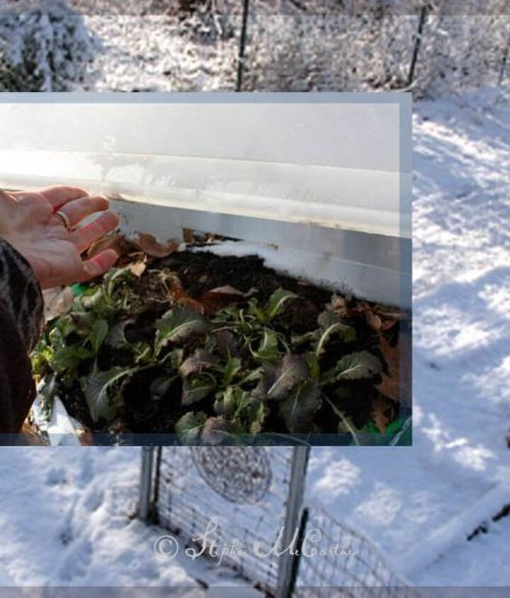 Hardy plants thrive with winter protection.