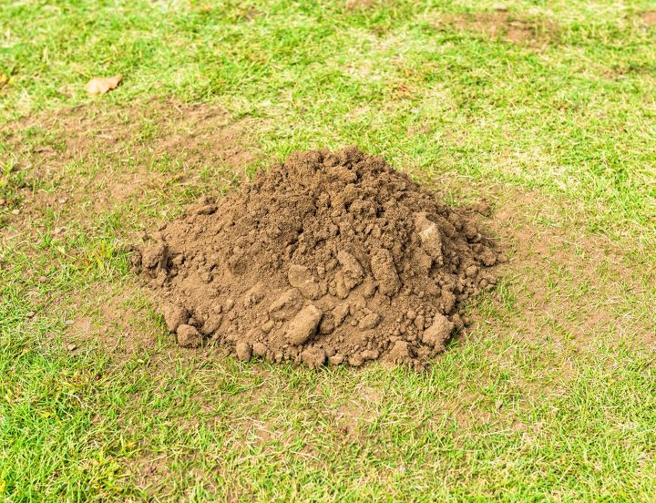 q how to get rid of moles in yard