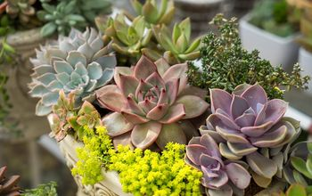 6 tips to grow succulents like a professional gardener