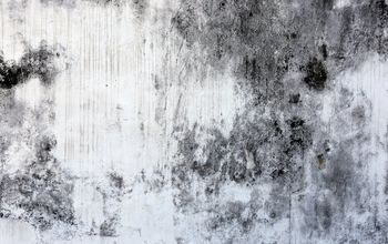 q how to clean black mold