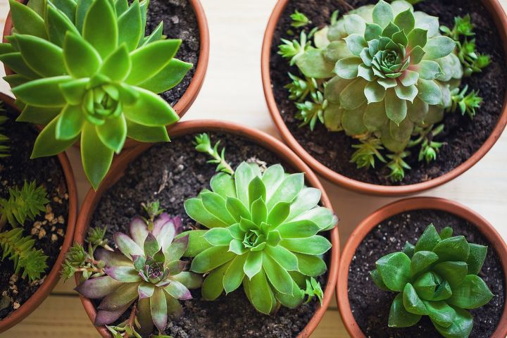 q how to take care of succulents