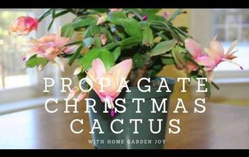 How to Propagate a Christmas Cactus