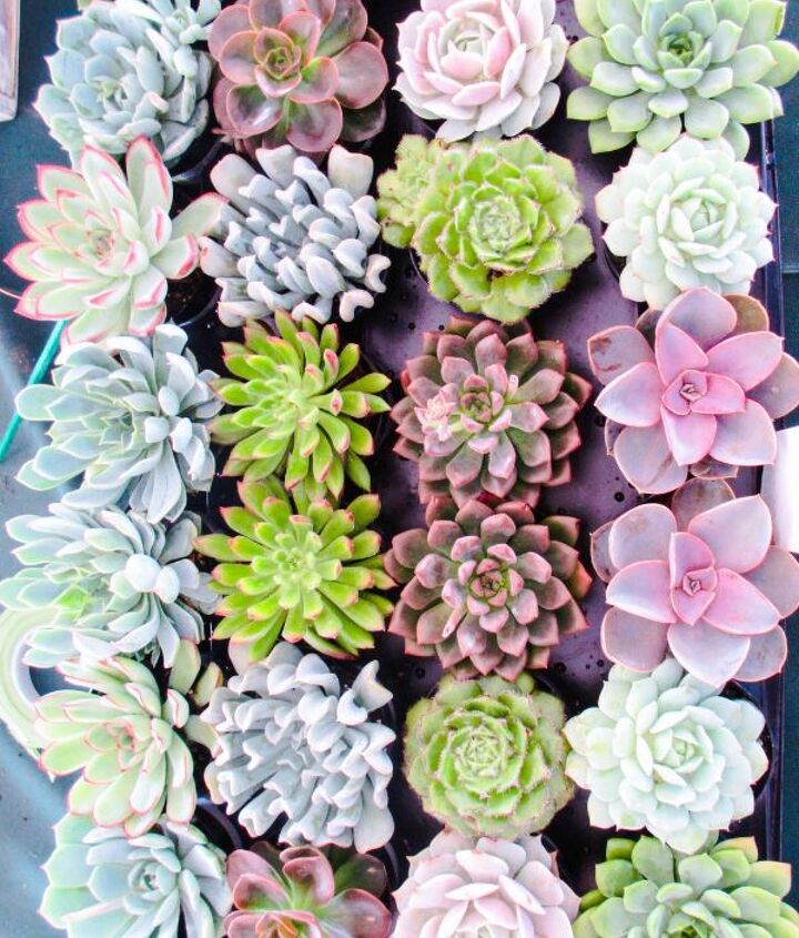 a guide to transplanting succulents into pots