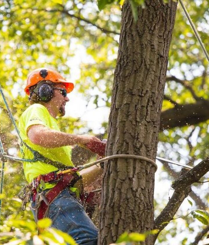 signs that you need tree removal in your yard