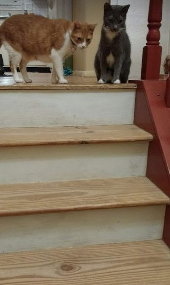 q i need to find a fast drying stain and sealer for my pine treads