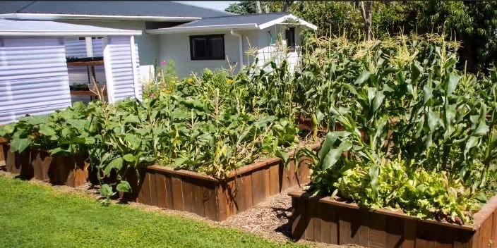 Raised Garden Bed (Jen Morris)