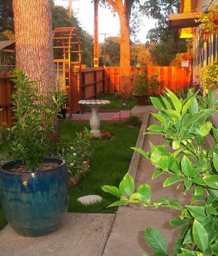 Front Yard Landscape Makeover (Michelle Ferrari)