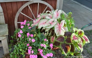 How to Jumpstart Summer Blooming Bulbs