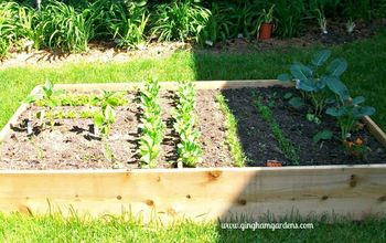 How to Plan & Plant a Vegetable Garden