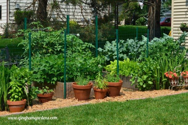 how to plan plant a vegetable garden
