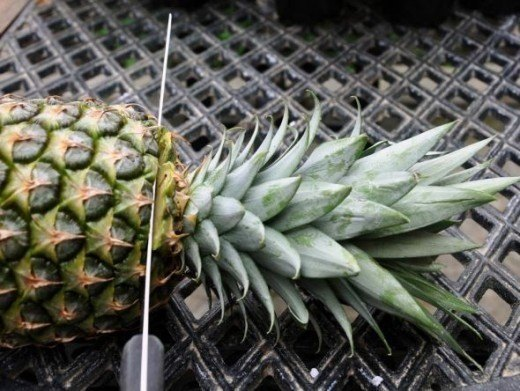 Pineapples (Eleni)