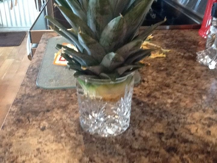 Growing a Pineapple (Cindy)