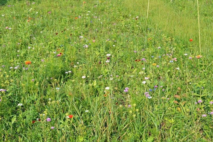 how to grow a wildflower meadow