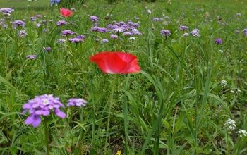 How to Grow a Wildflower Meadow