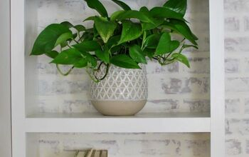 A Beginner's Guide to Plants for Your Home!