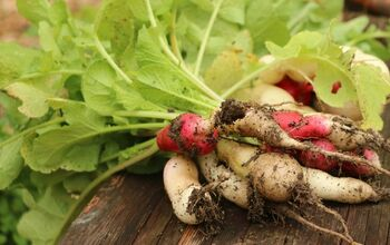 How to Grow Radishes in Containers