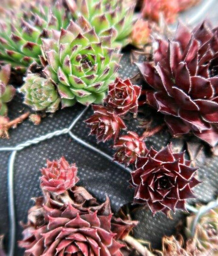 mini succulent planter