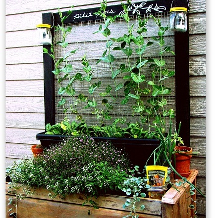 s 14 creative ways to plant a vertical garden maximize space, Use Chicken Wire to Make a Bright and Airy Vertical Garden Backdrop
