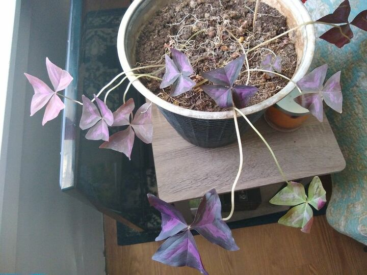 q how do i save this plant