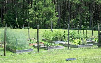 Take Your Yard to New Heights With Ten Terrific Raised Garden Bed Tips